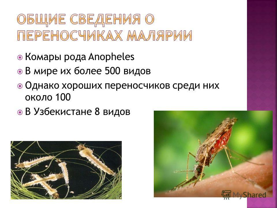 Описание и фото малярийных комаров