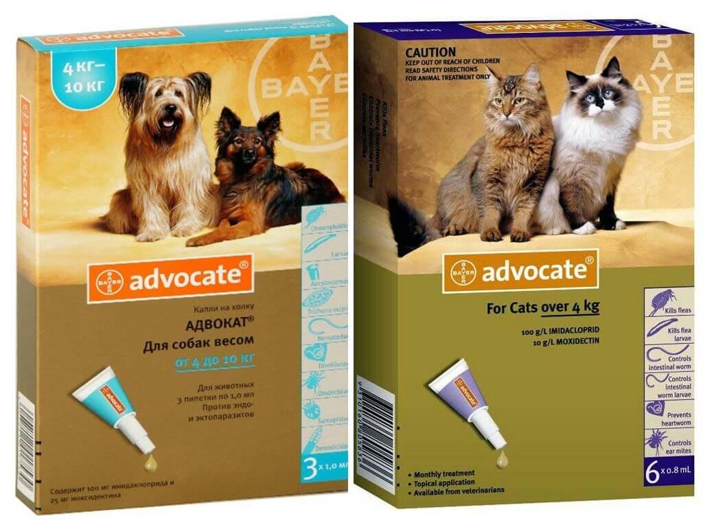 Капли адвокат для собак: инструкция по применению и отзывы собаководов