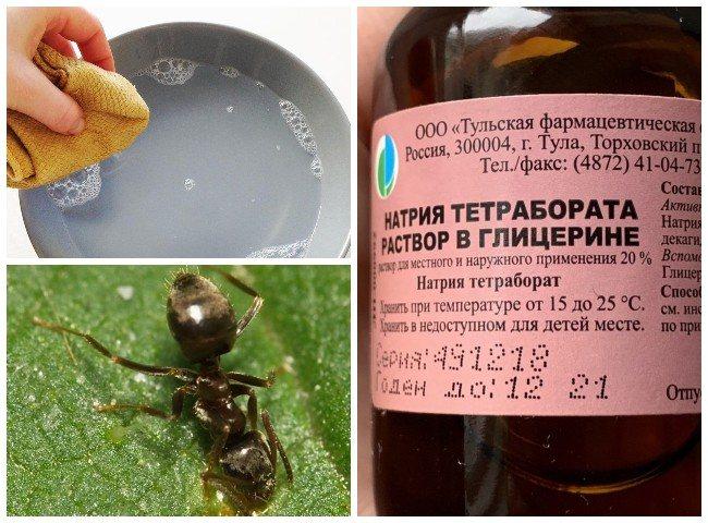 Борная кислота против муравьев в огороде: эффективные рецепты приманок