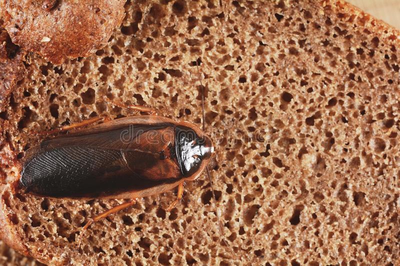 ᐉ тараканы: чем питаются, особенности ротового аппарата, что едят в квартире и сколько живут без еды - orensad198.ru