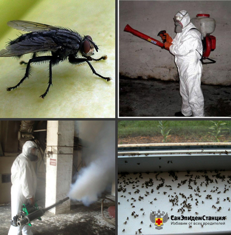 Способы борьбы с домашними насекомыми