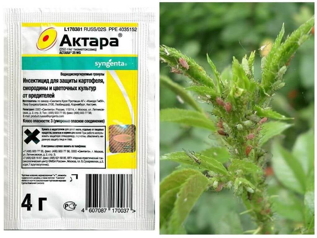 Актара от белокрылки на растениях: борьба с вредителем