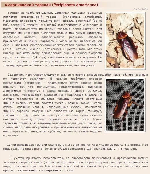 Где прячутся тараканы: места на которые нужно обратить внимание