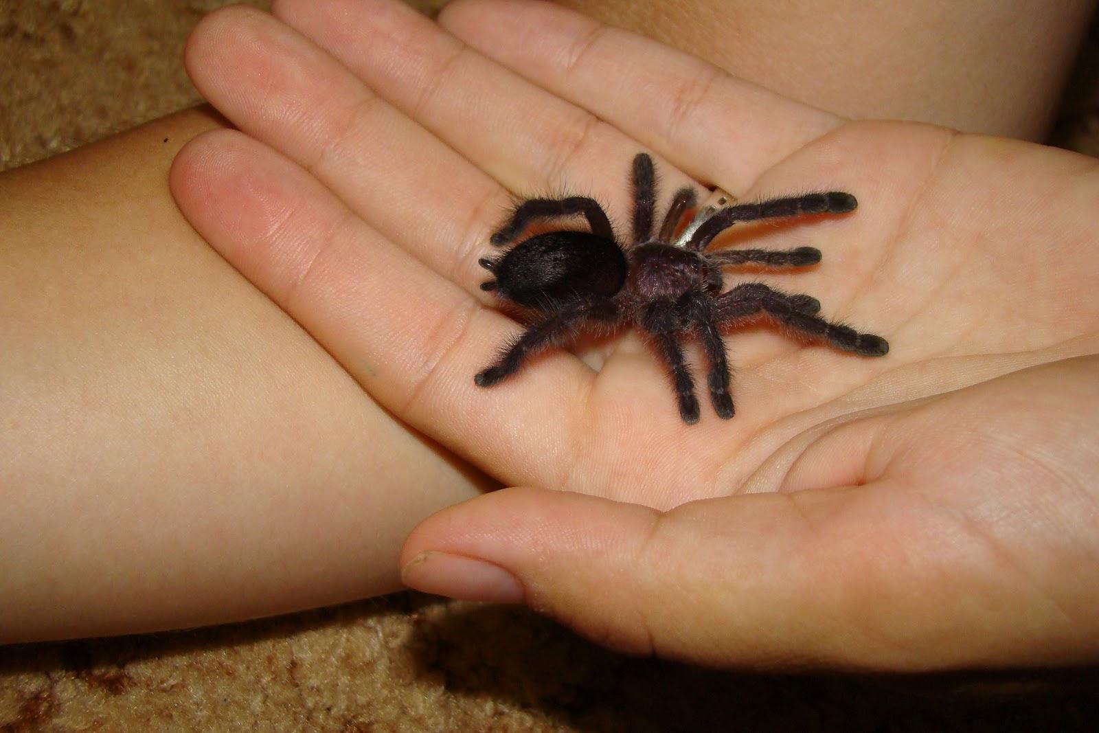 Паук с длинными тонкими ножками – что это за создания?