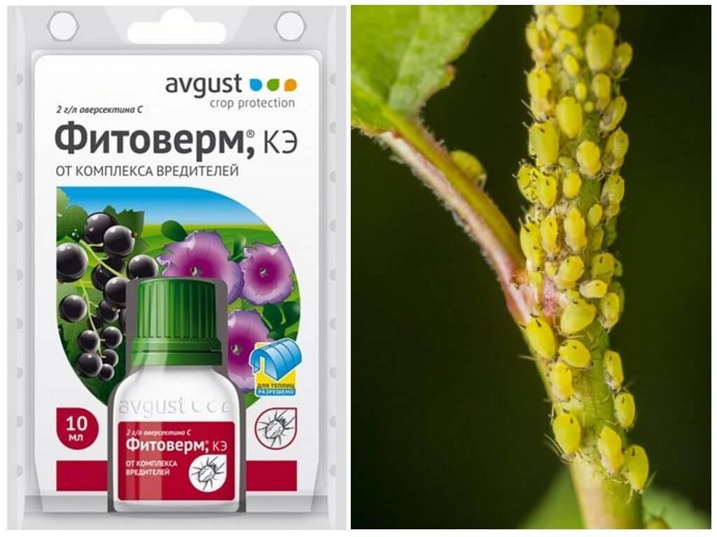 Фитоверм для защиты растений: разбираемся с инструкцией по применению
