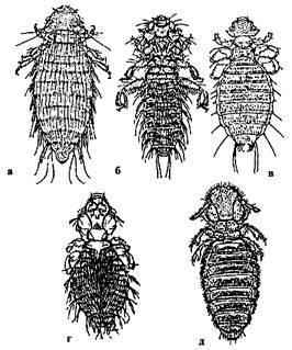 Откуда берется жук-кожеед в квартире и как от него избавиться?