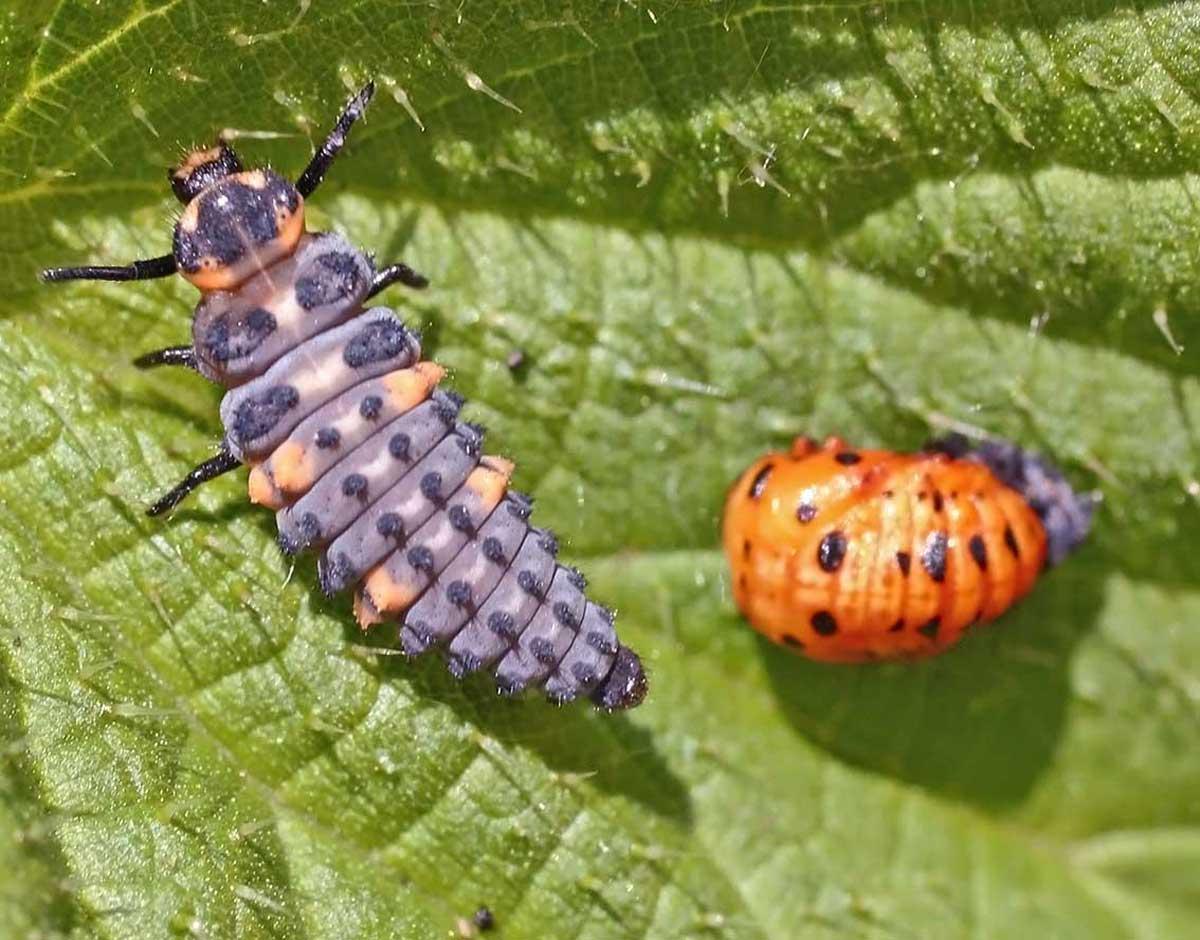 Самые ядовитые насекомые в мире