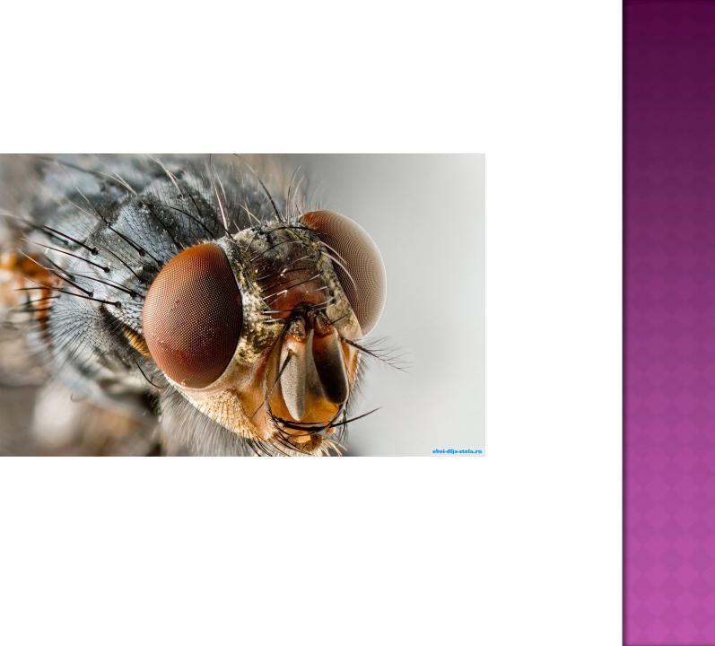 Для чего мухи потирают лапками? - hi-news.ru