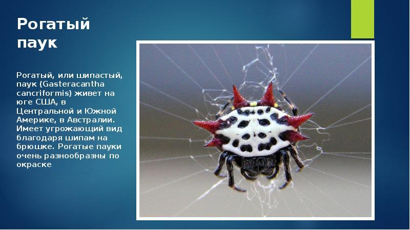 24 самых необычных паука в мире • всезнаешь.ру
