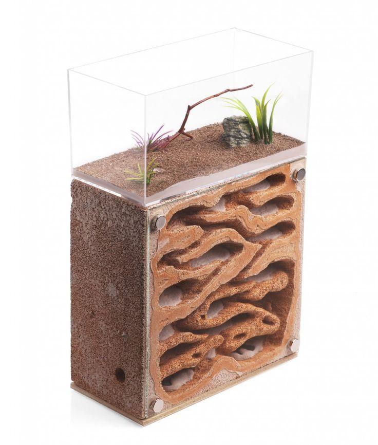 Ферма муравьев - что это такое, как создать, обеспечение комфортных условий для насекомых