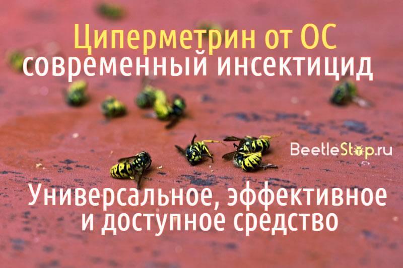 Как правильно использовать циперметрин от ос? Основная информация о доступном инсектициде и способах применения против жалящих насекомых