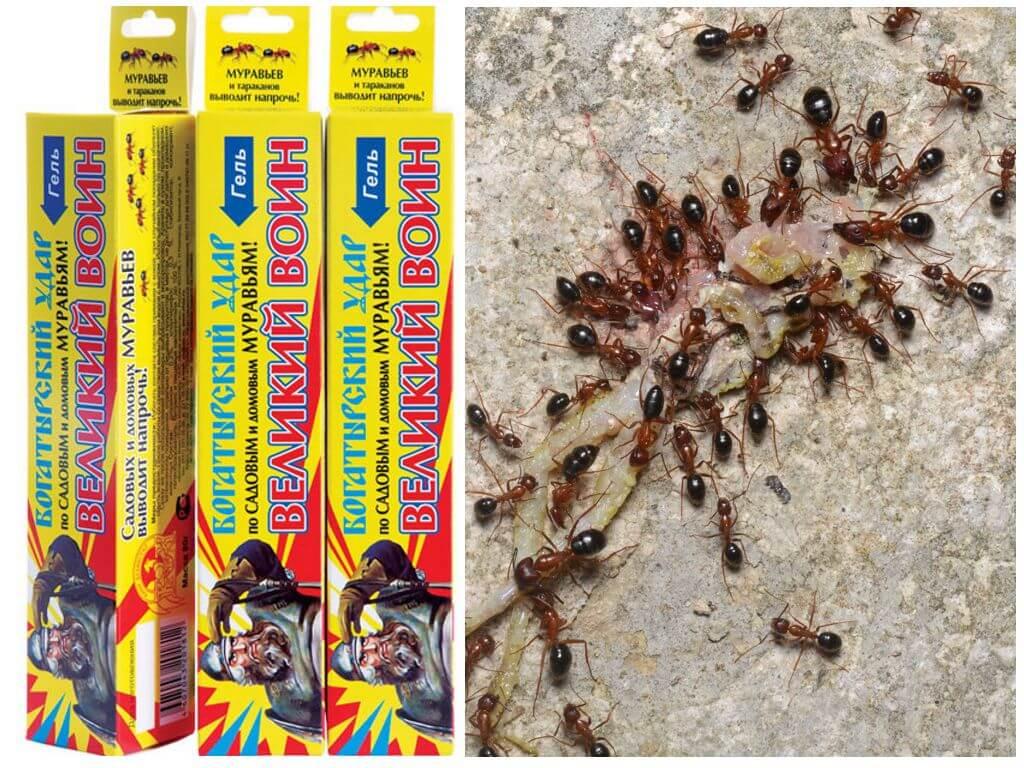 Лучшие средства от домашних муравьев в квартире, что использовать кроме аэрозолей?
