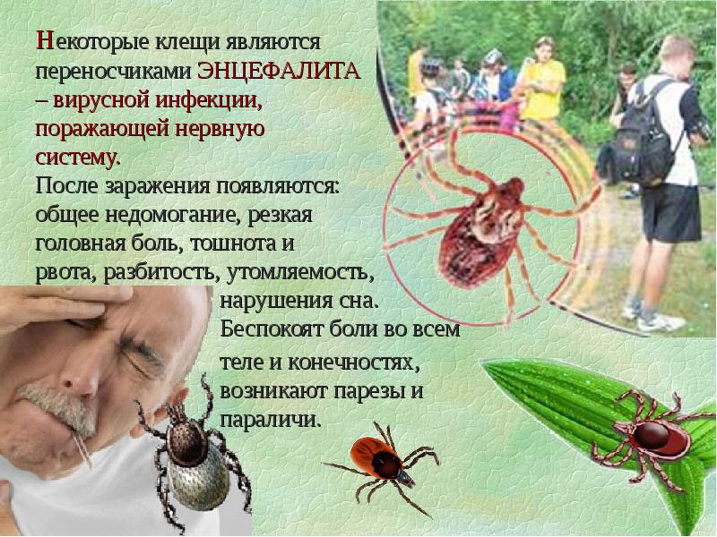 Энцефалитный клещ: как выглядит с фото, симптомы укуса клеща, признаки, последствия
