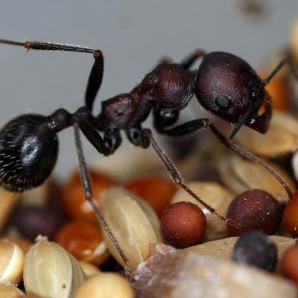 ᐉ чем питаются муравьи: что они едят в природе, в лесу, а также в саду, огороде или в квартире - zoovet24.ru