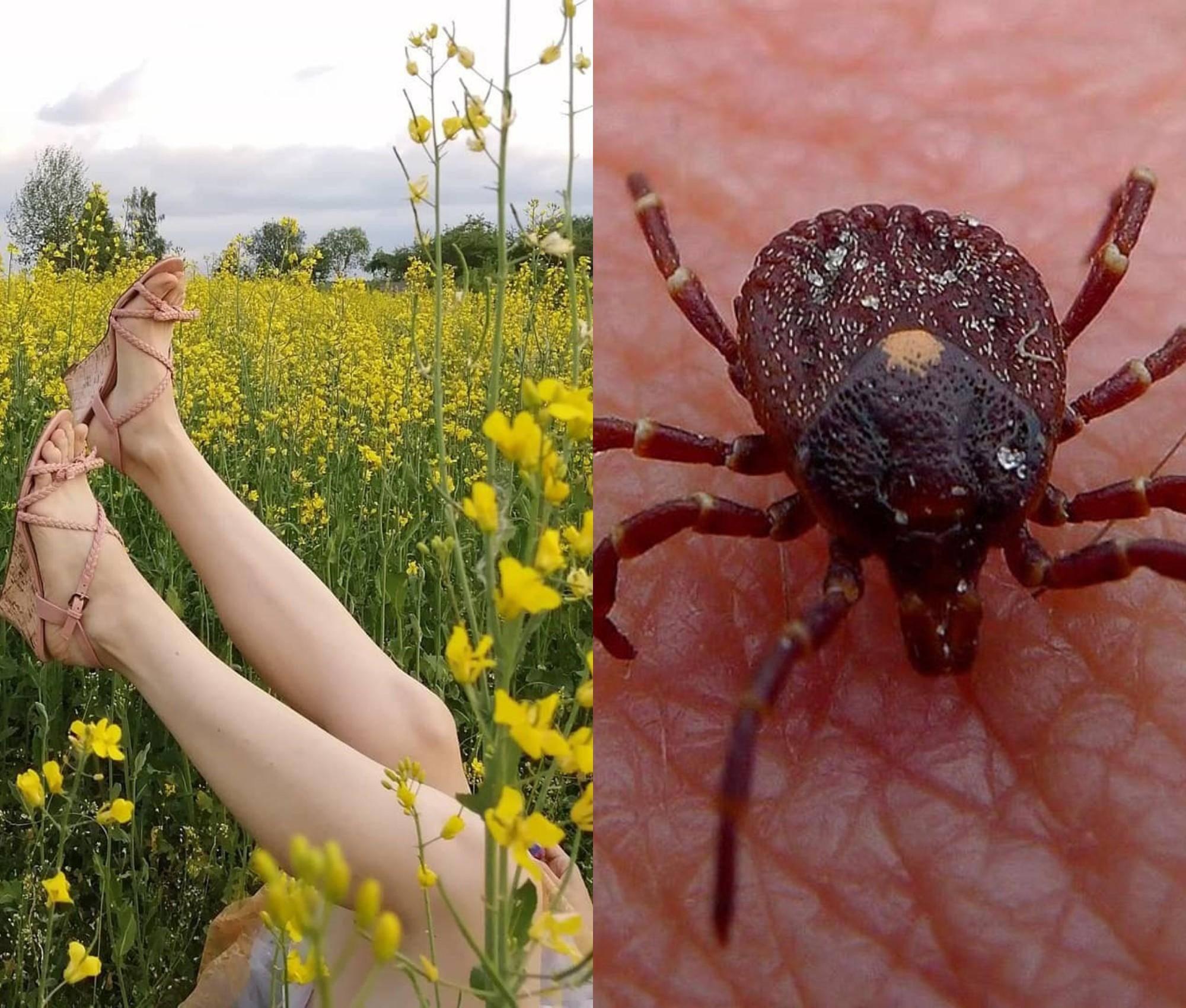Борьба с паутинным клещом: народные средства и химикаты