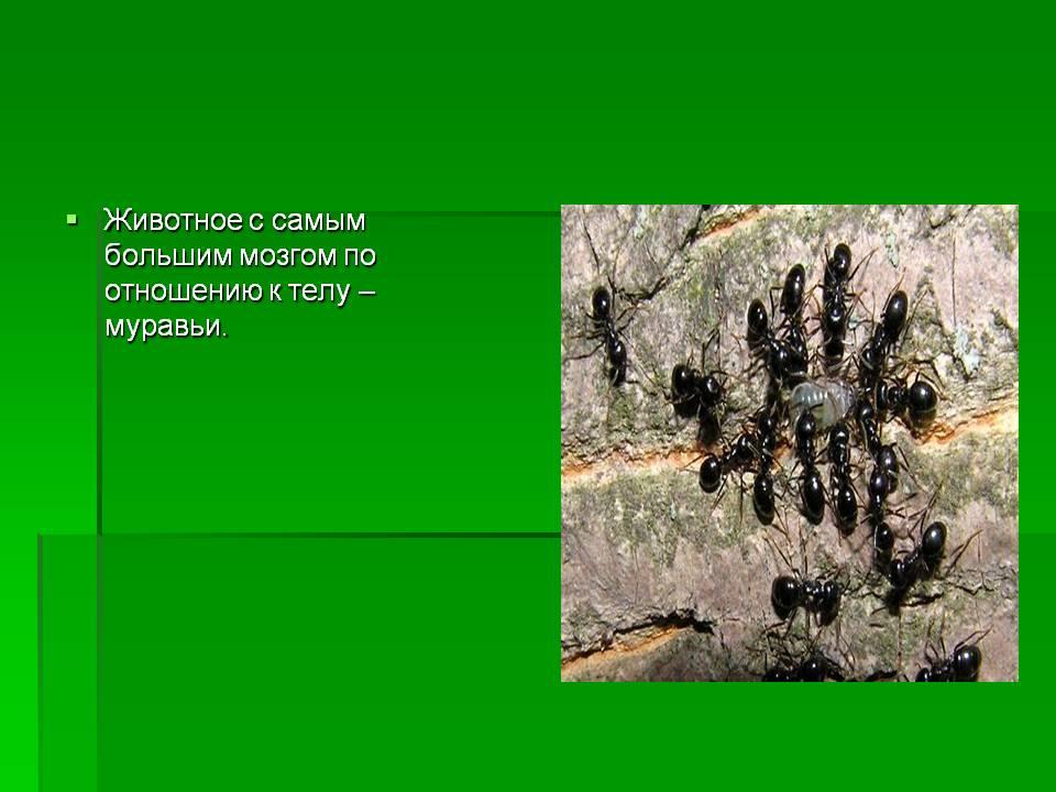 Кто ест муравьев: всё о врагах муравья от а до я и фото