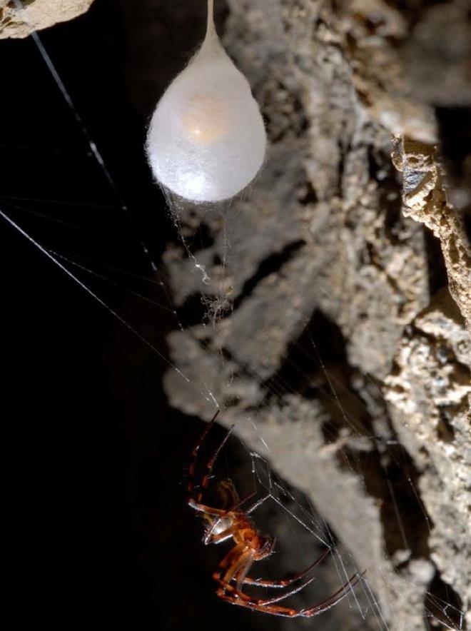 Как размножаются клещи – 4 стадии развития, сколько и где откладывают яйца, и как происходит превращение от яйца к взрослой особи (имаго)