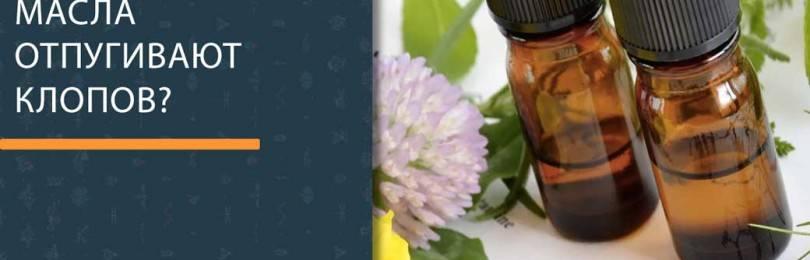 Эфирные масла в быту: защита своего дома от насекомых