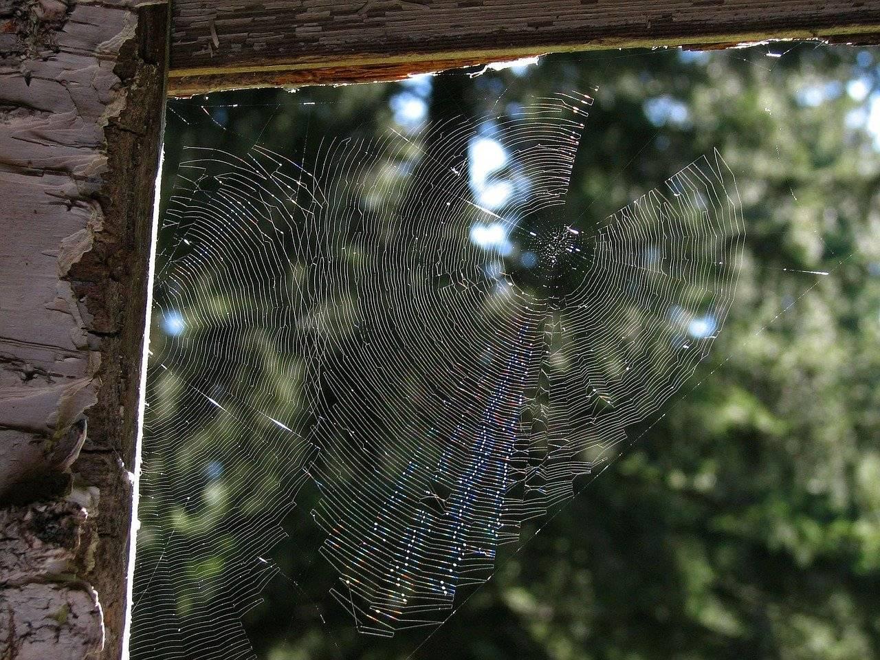 Как избавиться от пауков навсегда (в частном доме, в квартире, на балконе, в теплице) в домашних условиях: народные средства, химические препараты