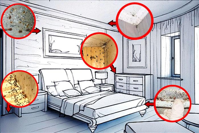 Клопов в квартире мало или много? стадии заражения клопами
