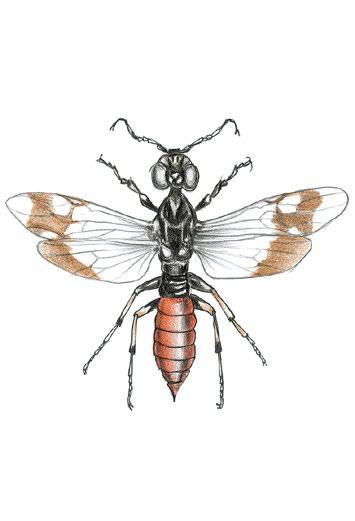 Оруссус паразитический — природный враг ксилофагов