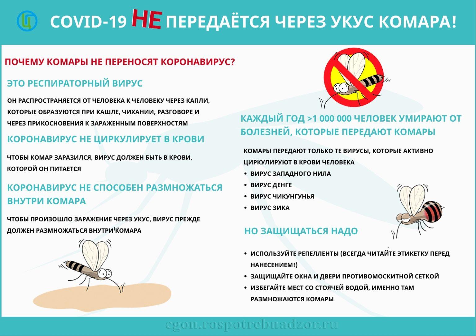 Какие болезни переносят комары, являются ли разносчиками инфекции