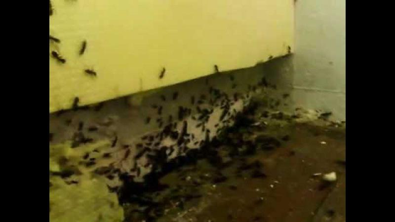 Спят ли муравьи ночью
