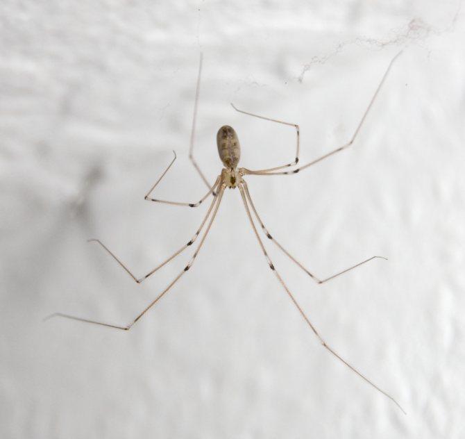 Как избавиться от пауков в квартире, частном доме, во дворе, на улице в теплице? чем обработать дом от пауков? верные способы избавиться от пауков, поселившихся у вас дома.