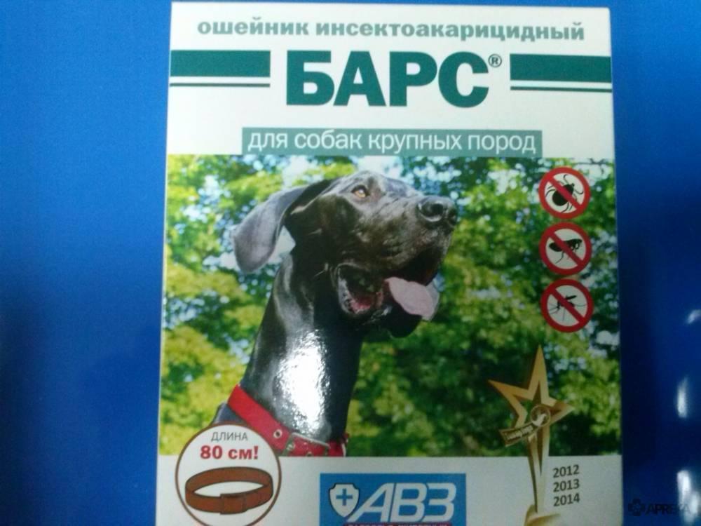 """Средства """"барс"""" от клещей для собак и кошек: цена препаратов, инструкции по применению и отзывы реальных владельцев"""