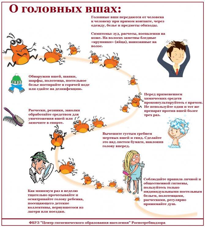 Профилактика педикулеза у детей в домашних условиях