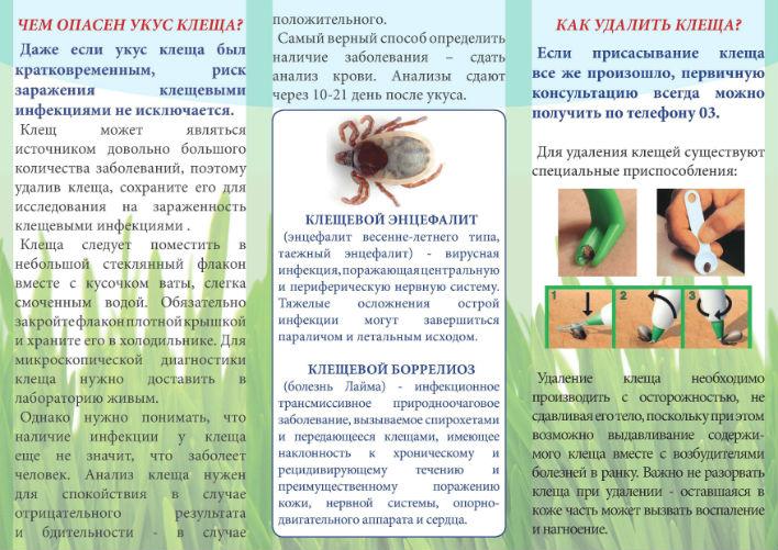 Болезни после укуса клещей | университетская клиника