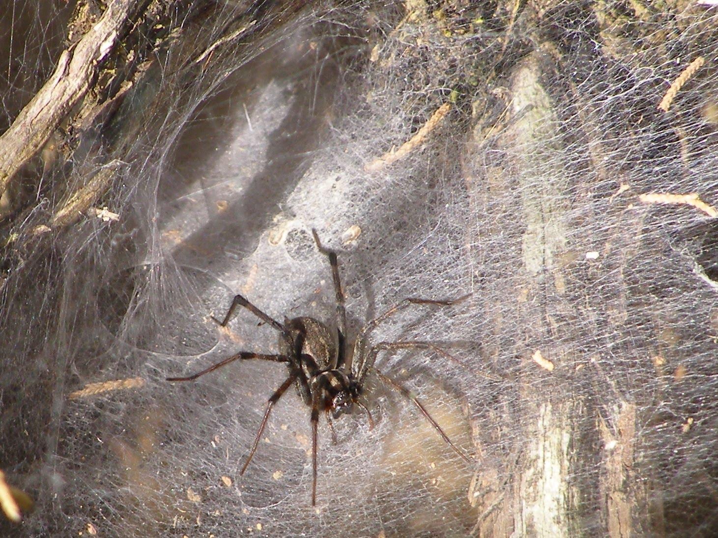 Содержание паука-птицееда дома – советы и рекомендации