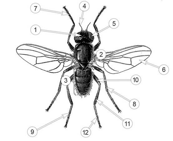 Внешнее строение представителей класса насекомые