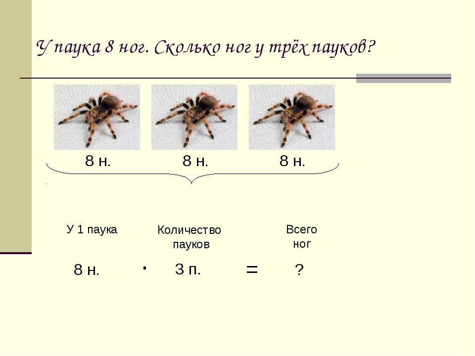 Членистоногие пауки: общая характеристика класса паукообразных, сколько ног у насекомого