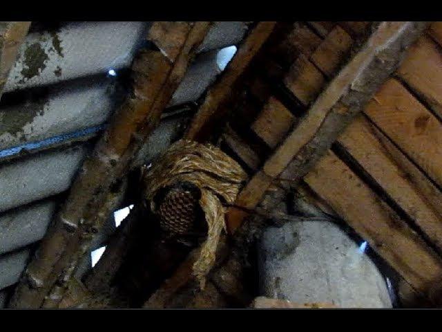 Жужжат и кусают: как избавиться от ос на даче?