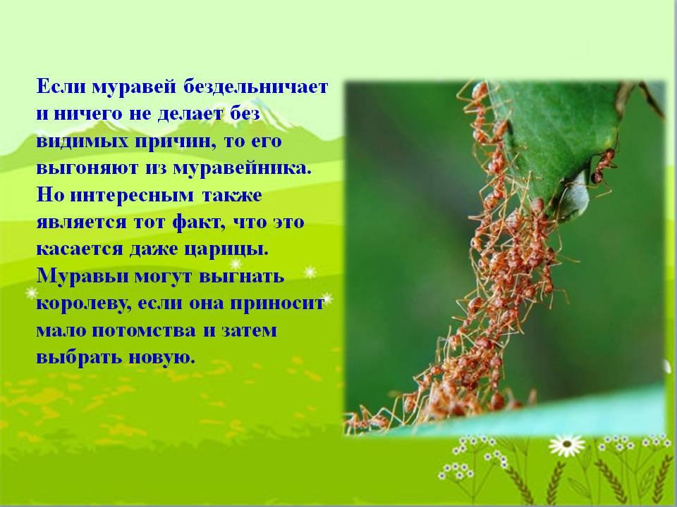 Интересные факты о муравьедах