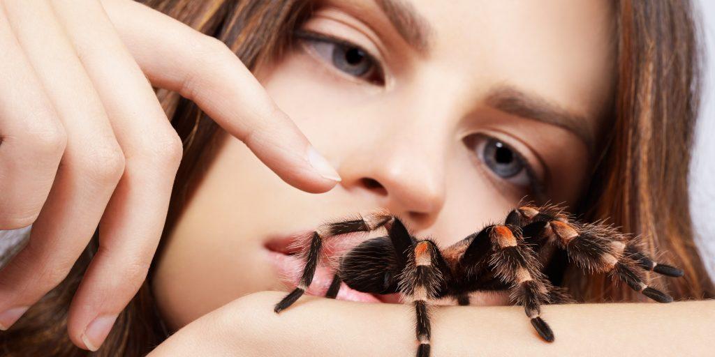 Боязнь тараканов или блаттофобия: причины появления