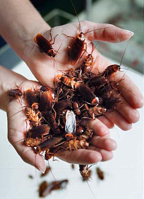 Как расшифровать сон, в котором много тараканов — 40 значений