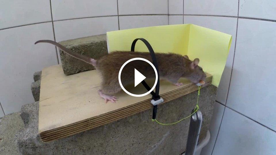 Приманки для крыс и мышей