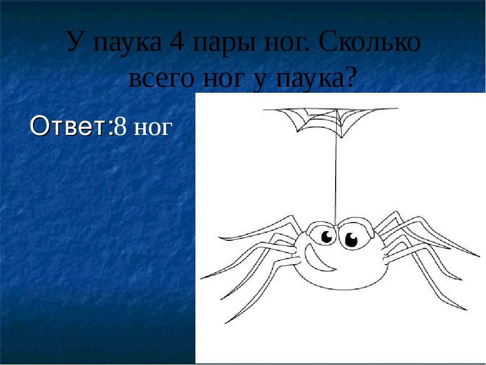 Сколько лап у паука: их длина и функция