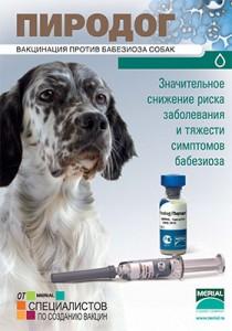 Прививка от клещей для собак: виды вакцин и правила проведения