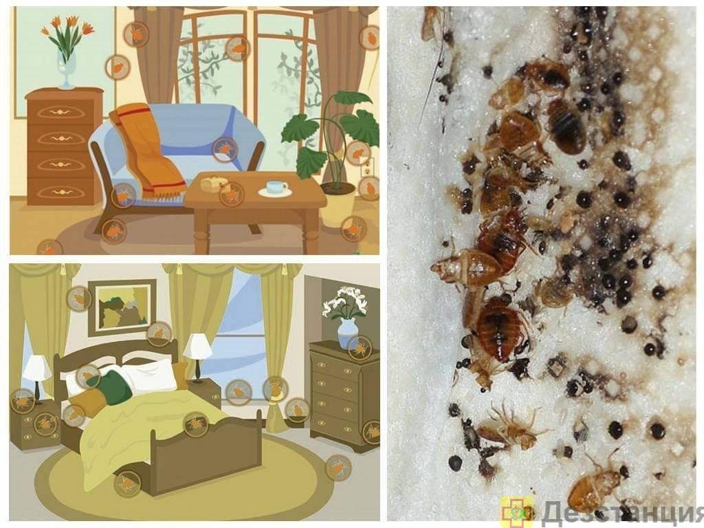 Причины появления клопов в квартире – откуда берутся и как избавиться