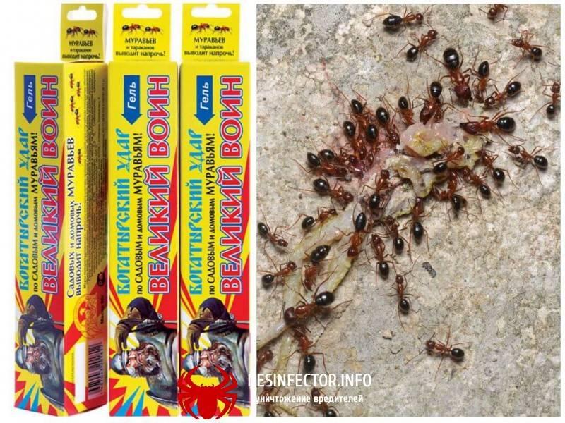 Как избавиться от муравьев: лучшие народные средства