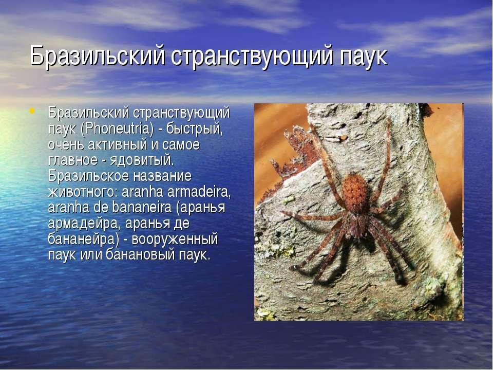 5 туристических стран, где обитают очень опасные насекомые