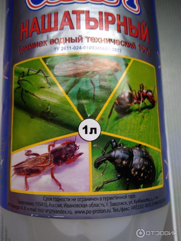 Как бороться с морковной мухой народными и магазинными средствами
