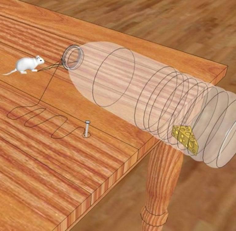 В доме завелись грызуны! как поймать мышь без мышеловки?