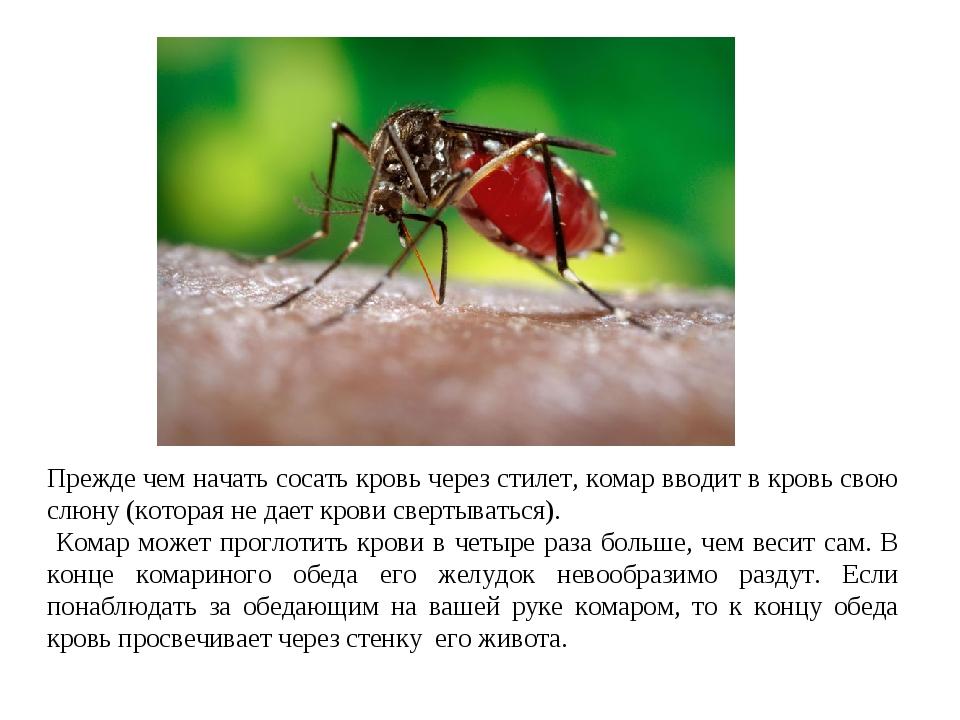 Любимая группа крови для комаров