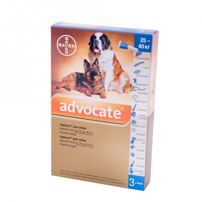 Адвокат капли для собак и кошек на холку: инструкция и отзывы