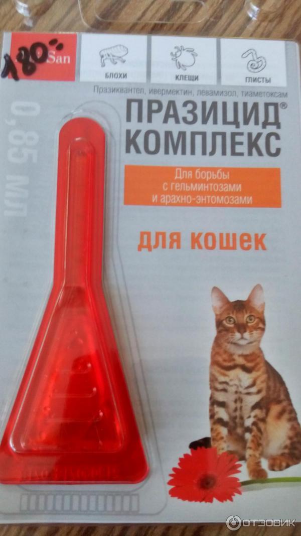 Эффективные средства для кошек от блох и клещей