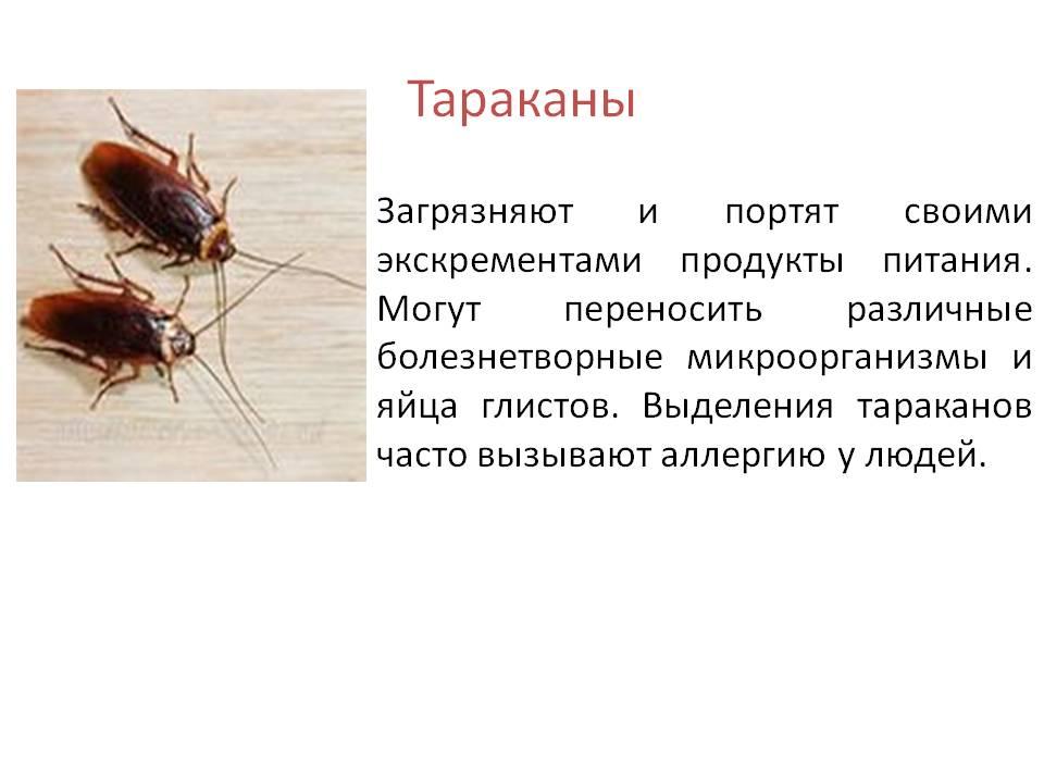 Чем полезны тараканы